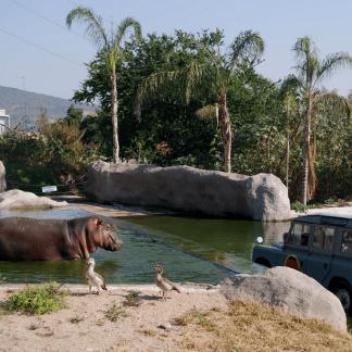 zoológico guadalajara, tour zoologico guadalajara, zoologico guadalajara, safari guadalajara, acuario del zoologico guadalajara, recorrido en el zoologico