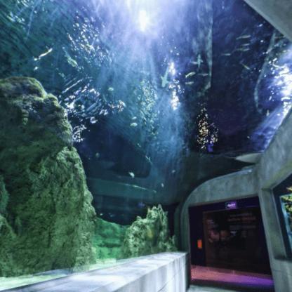 Acuario Michin, tour personalizado, guia, guadalajara, animales marinos.