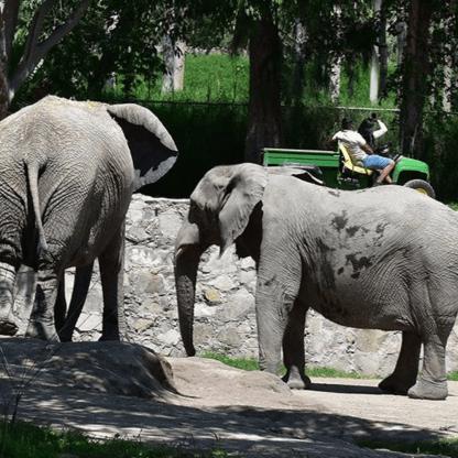 Zoologico de Guadalajara, tour personalizado, guadalajara, animales. aventura.