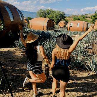 tequila, tour guadalajara-tequila, tequila tour, agaves, tour agavero, degustación de tequila, el mejor tequila, paseo a tequila, tour ida y vuelta tequila.